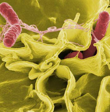 infectia cu Salmonella