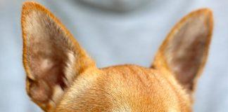 agresivitatea canina